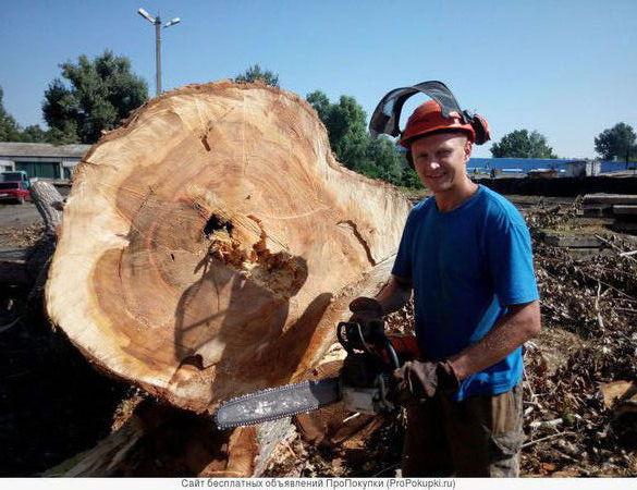 Спил деревьев,погрузка и вывоз порубочных остатков