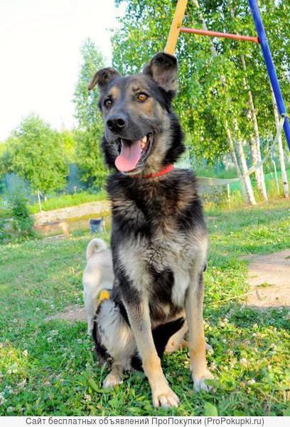 Собака-подружка ищет дом