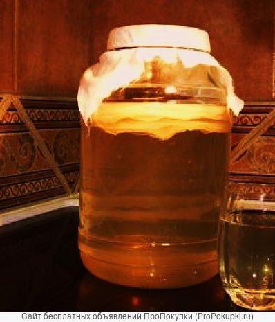 Чайный гриб (комбуча, медузомицет, японский квас)