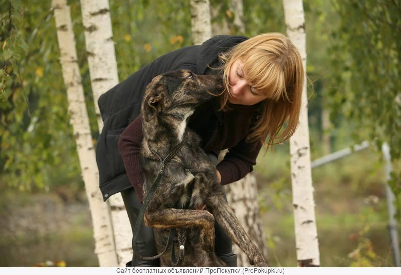 Рокки-тигровый кобель в дар