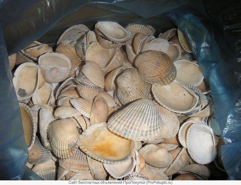 Продаем морские ракушки, средние и крупные