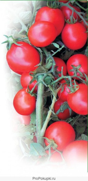 Семена Китано. Предлагаем купить cемена томата АСВОН F1