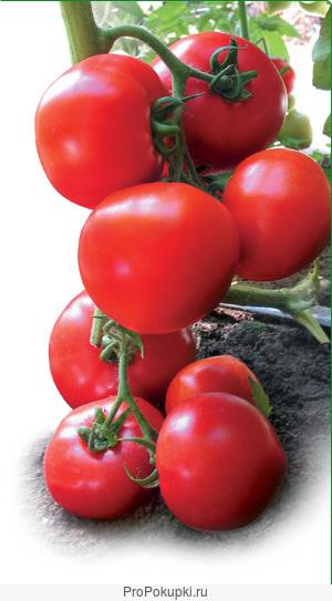 Семена Китано. Предлагаем купить семена томата ЯДВИГА F1
