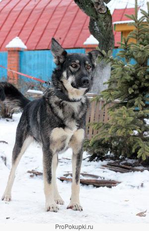 Вера - собака с красивыми глазами