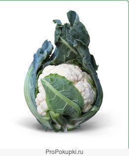 Семена Китано. Предлагаем купить семена цветной капусты МИСОРА F1