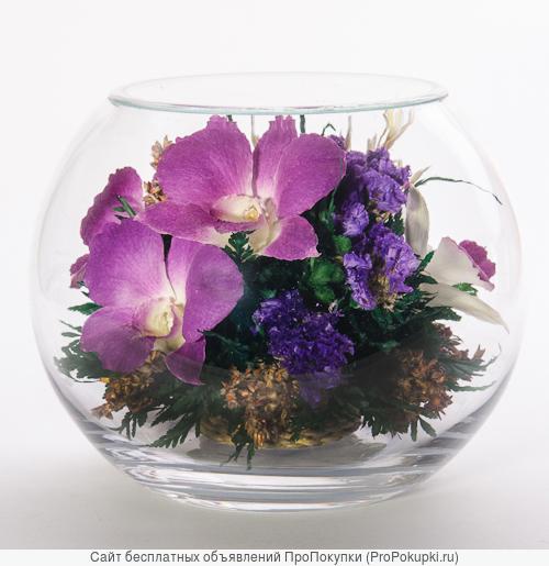 Композиции из живых орхидей в вакууме для интерьера ( на 5 лет )