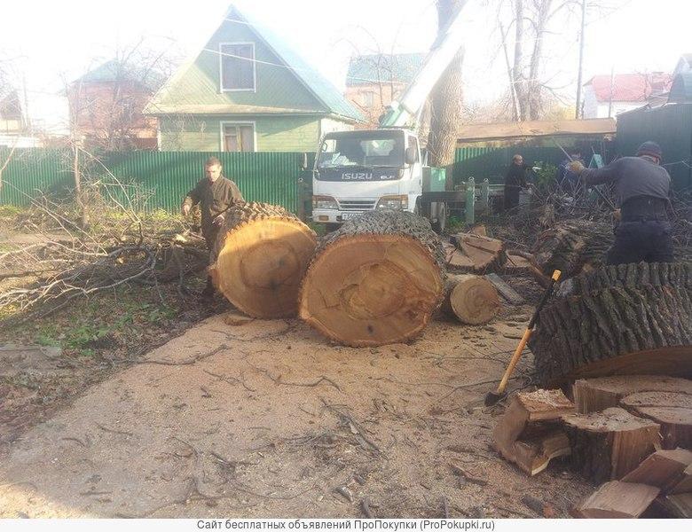 Оказываем услуги по спилу, обрезки деревьев
