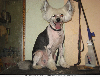 стрижка,тримминг(щипка)собак и кошек