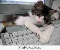 Компьютерная помощь. Специалист с высшим профильным образованием.