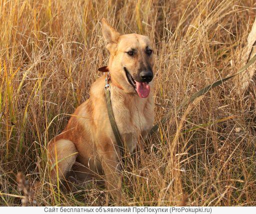 Добрый пёс Арчи в дар