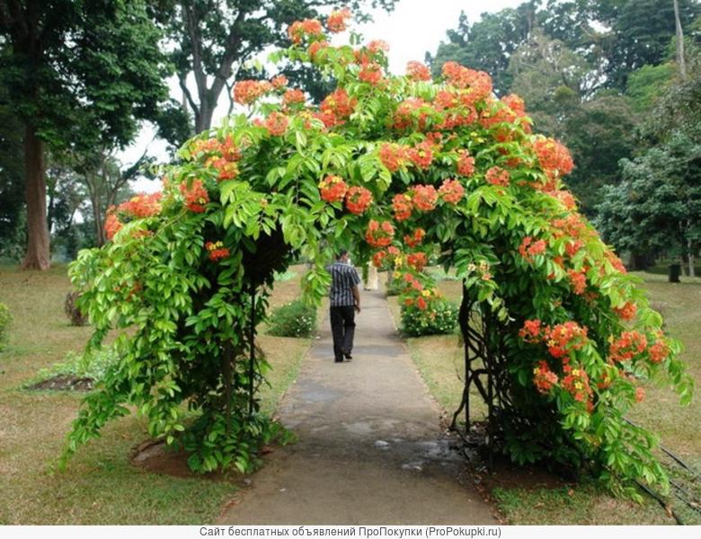Изготовление арок для вьющихся растний