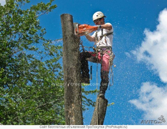 Спил, валка, кронирование деревьев