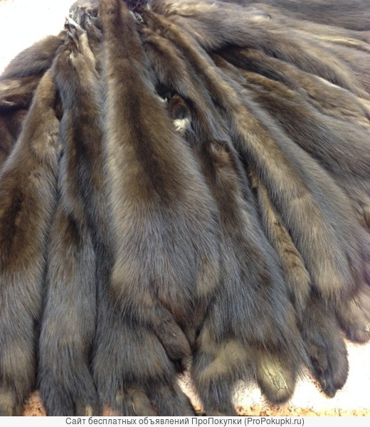 Шубный набор лесной куницы тонированной 48шт.