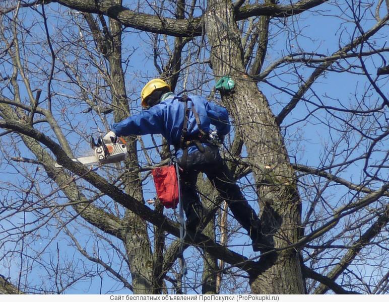 Обрезка веток деревьев - санитарная и формовочная