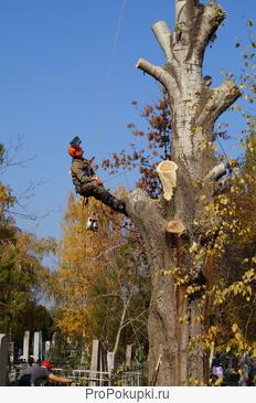 Спил, обрезка деревьев. Спилить дерево в Краснодаре. любой сложности на Кладбище