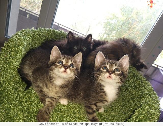 Отдам маленьких котят