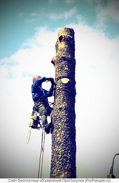 Удаление, кронирование деревьев