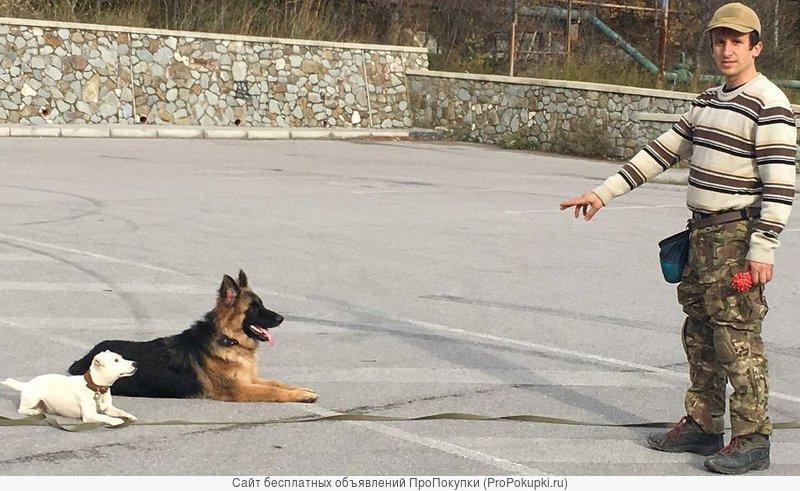 Дрессировка собак в Ялте