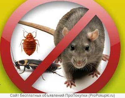 уничтожить убить вывести травить клопы НЕТ блохи муравьи тараканы мыши крысы