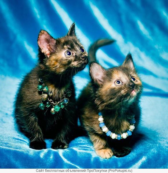 Два ярких котенка ищут хозяев