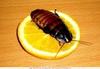 Уничтожение тараканов, клопов, муравьев, ос