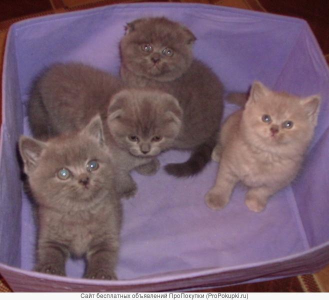 Игривые и шустрые котятки