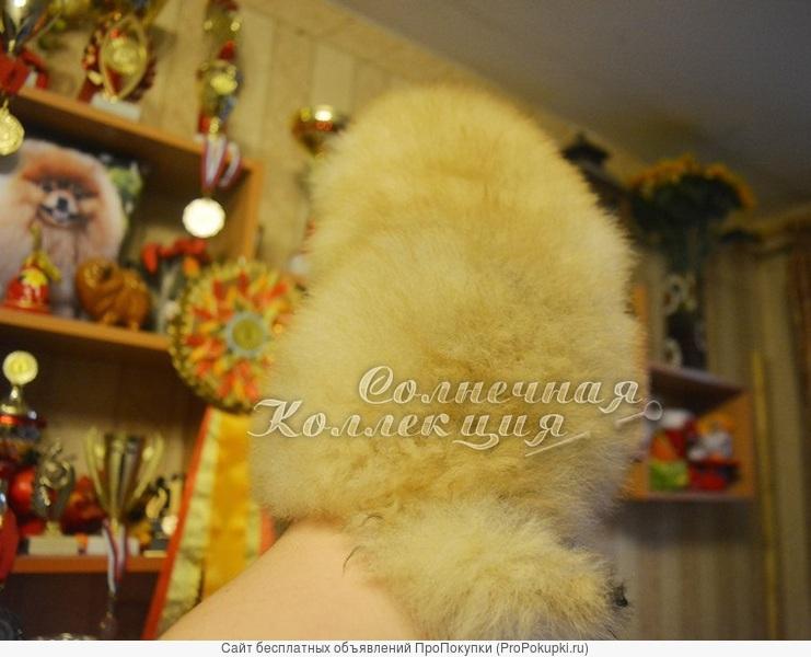 Шпиц померанские медвежата из питомника РКФ