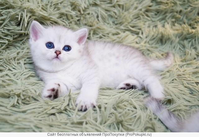 красивые котята с документами
