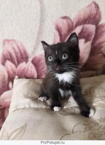 Красивые котята, ласковые, игривые, умные )