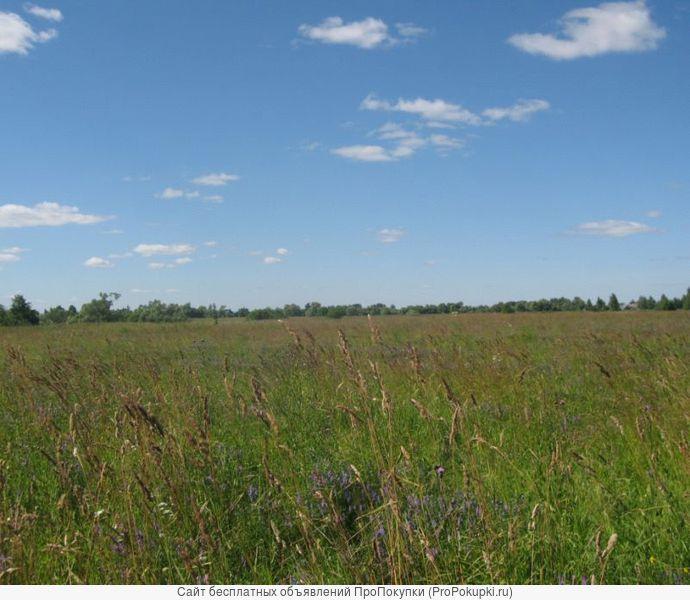 Земельный участок сельхозназначения 550 Га