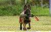 Дрессировка щенков в Зеленограде