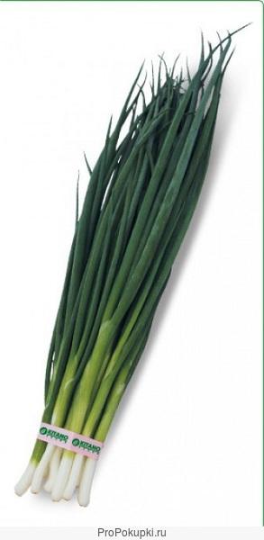 Семена фирмы kitano seeds (китано)