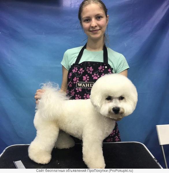 Груминг для домашних животных
