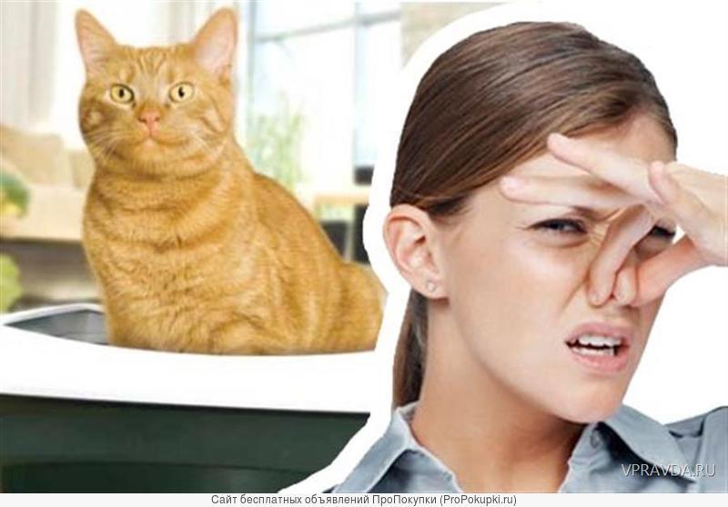 Спрей от запаха кошки. Как избавиться от запаха в квартире?