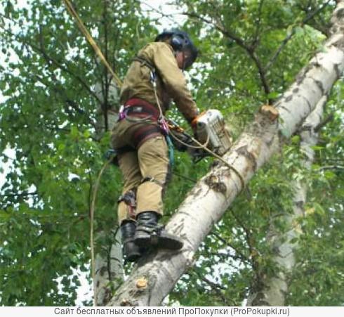Спиливание деревьев и благоустройство участков