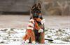 Дрессировка всех любых собак