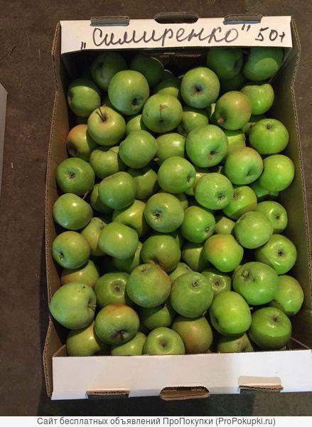 Яблоки из ростовских садов