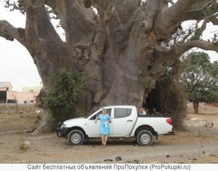 Баобаб. Порошок мякоти плодов. Продукция из Западной Африки
