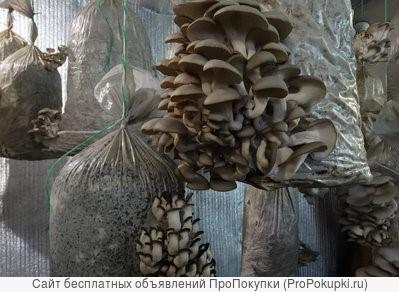 Уникальный ко мплект для выращивания вешенки дома и на даче