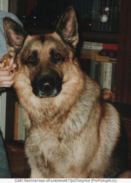 Передержка собак в Москве в домашних условиях