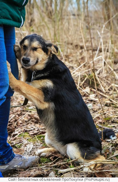 собака в добрые руки щенки