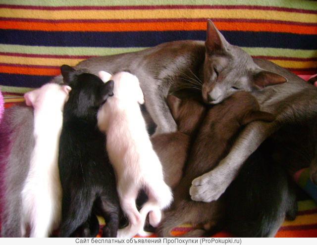 Разноцветные котята солид