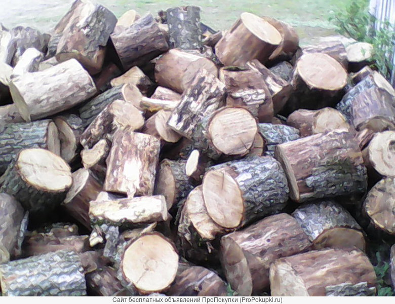 Дрова(дуб,берёза,сосна)