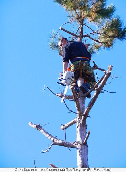 Спил деревьев анапа