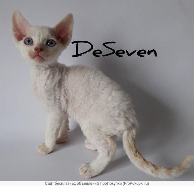 котенки Devonrex