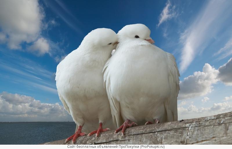 Приворот для любви. Восстановление отношений