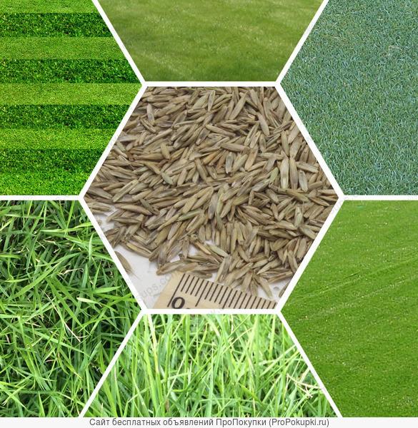Трава для газонов от 250 рублей за килограмм