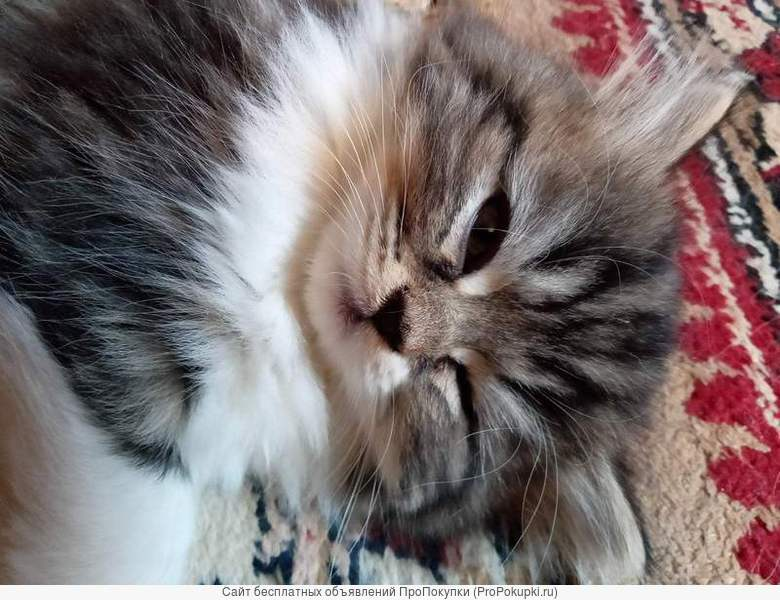 Котенок вашей мечты совсем близко