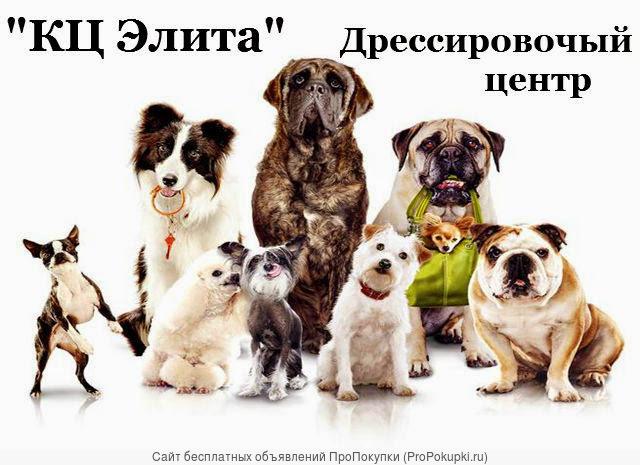 Дрессировка собаки с проживанием у кинолога