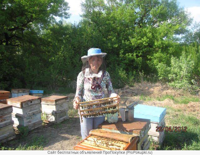 пчеломатка карпатской породы из Кисловодска